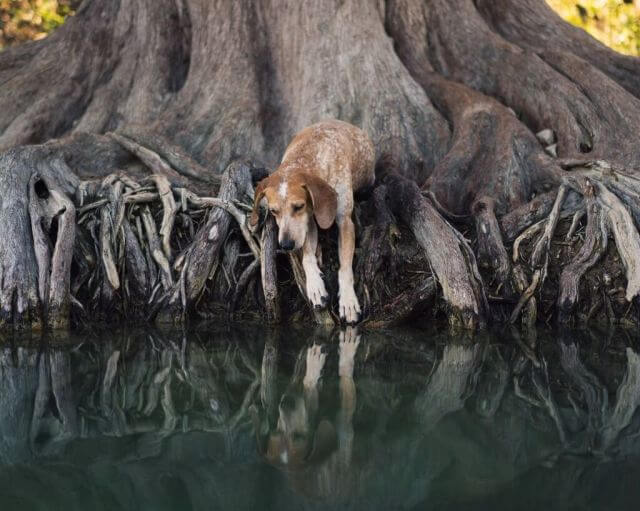 dog surreal picture