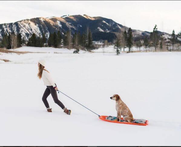 sled dog human
