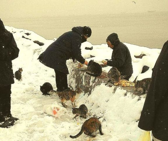 Woman Feeds 350 Stray Cats Every Day