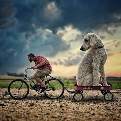 dog cycle