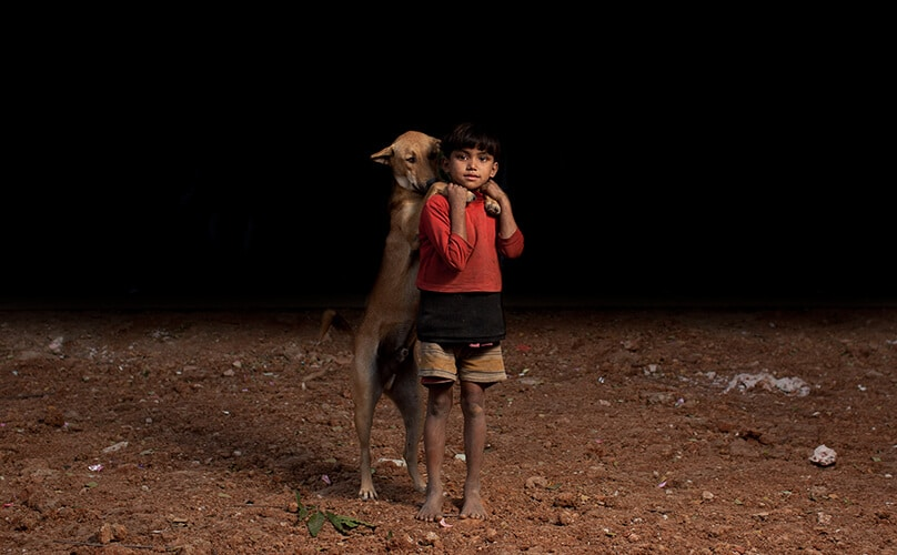bangladesh stray dogs