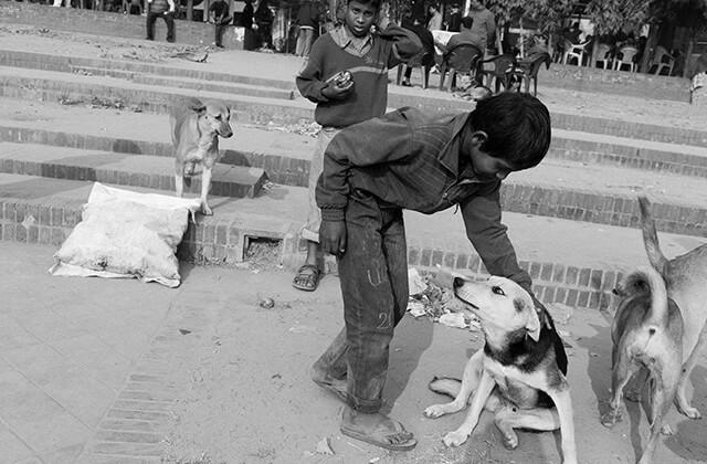 Dhaka stray dog