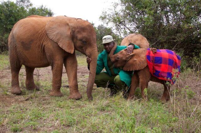 orphan elephant kenya