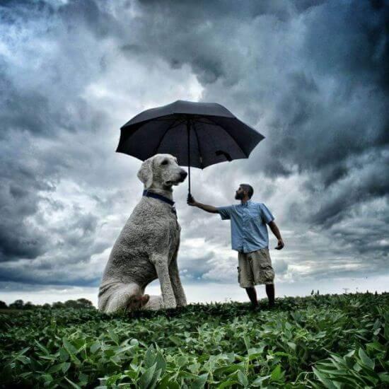 dog umbrella man
