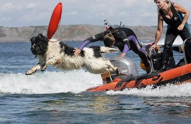 dog saves drowning