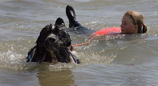 dog saves human