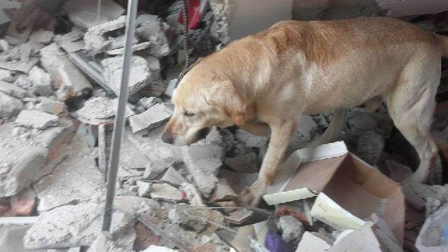 hero dog dies