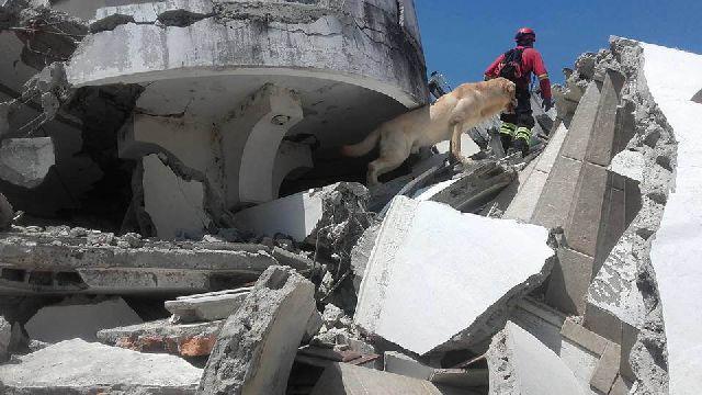 hero dog earthquake