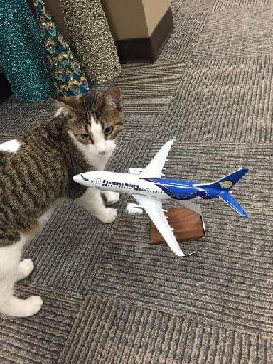 cat airplane