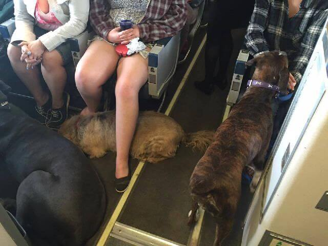 Airlines break the rule to allow dogs on board