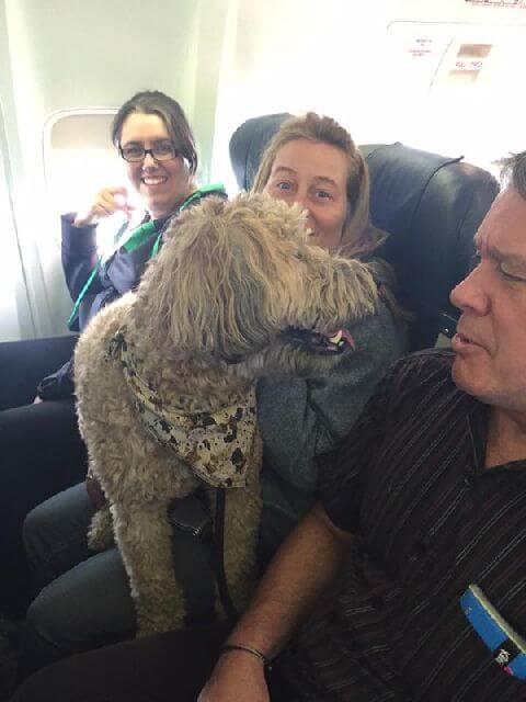 dogs plane