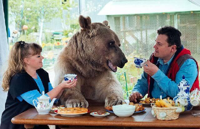 bear dining table