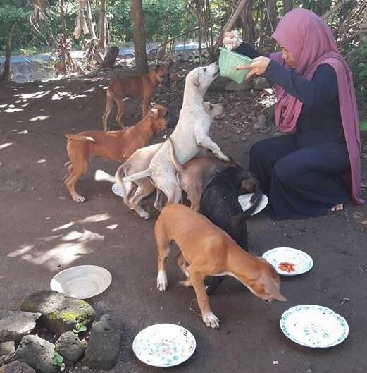 muslim woman feeds dogs indonesia