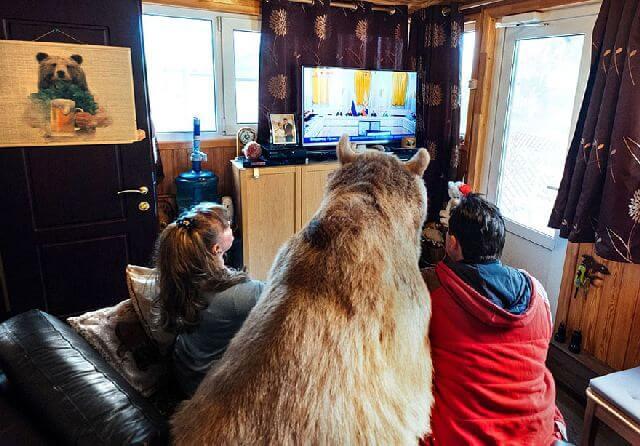 bear watching tv