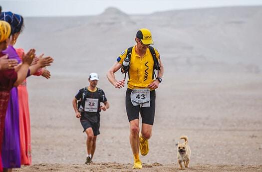 stray dog gobi desert