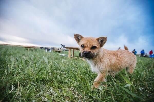 stray dog who ran Gobi desert