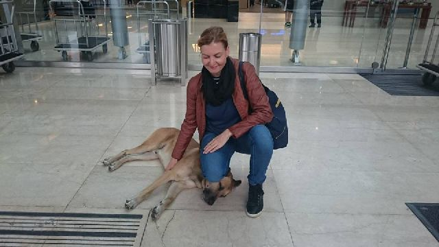 Flight Attendant Adopts Dog