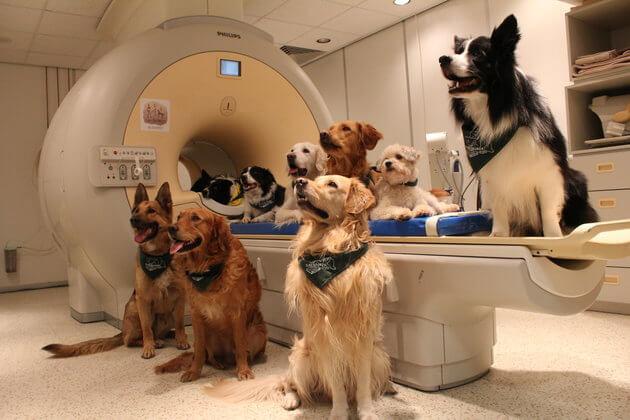 dogs understand human language