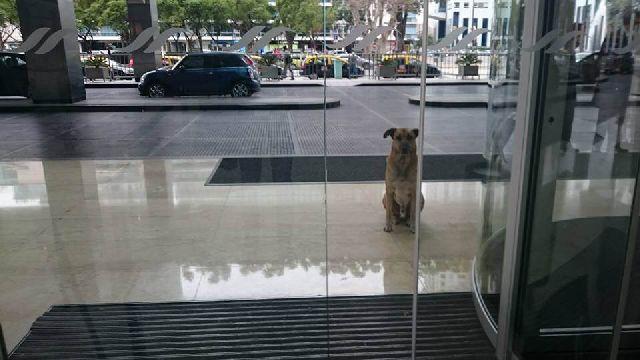 dog waits hotel