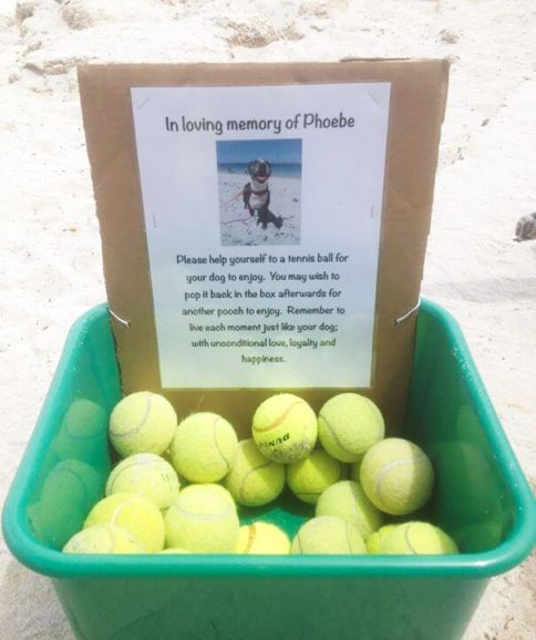 Dog Lovers who did awesome Things for their Dogs