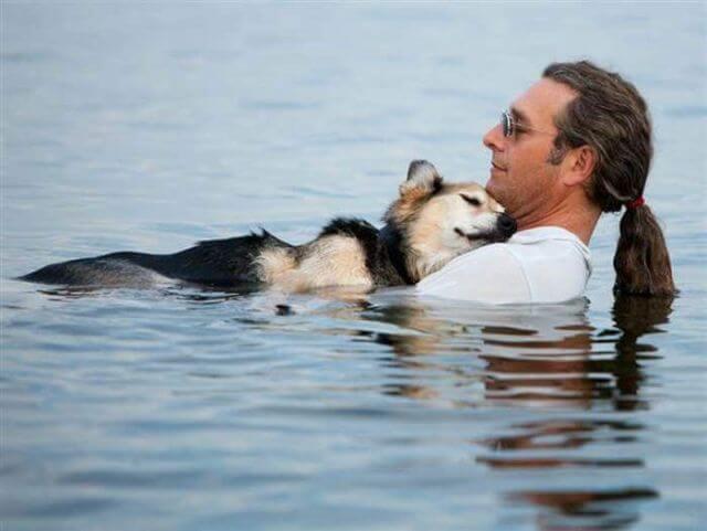 dog therapy swim