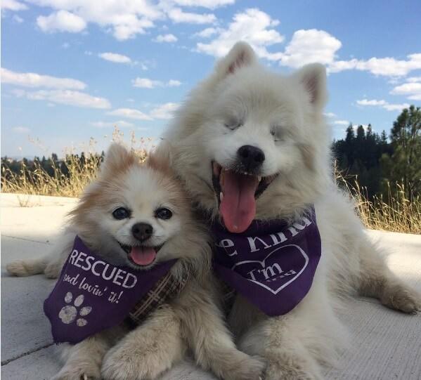 rescue blind dog