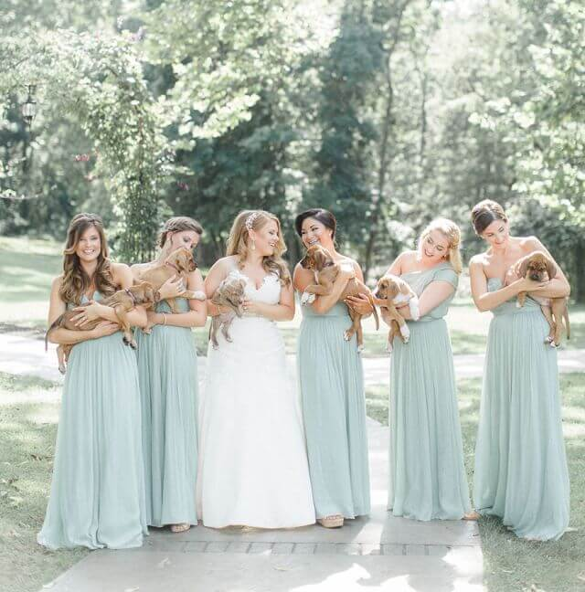 bride chose Puppies Instead of Flowers