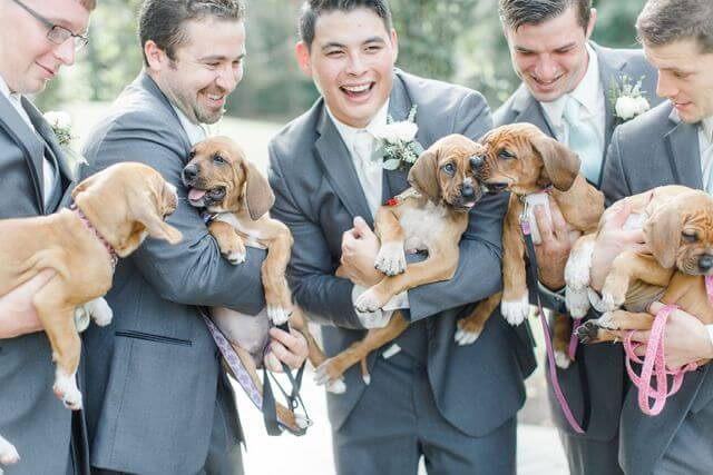 puppies wedding