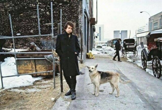 Why dogs love Bob Dylan
