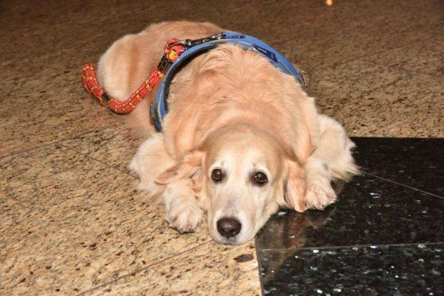 therapy dogs Mumbai Airport