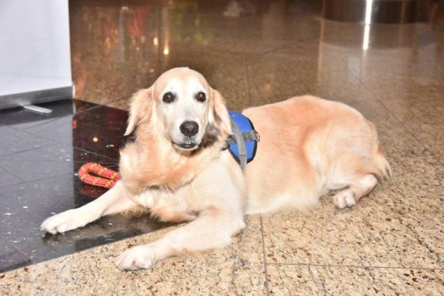 therapy dog india airport