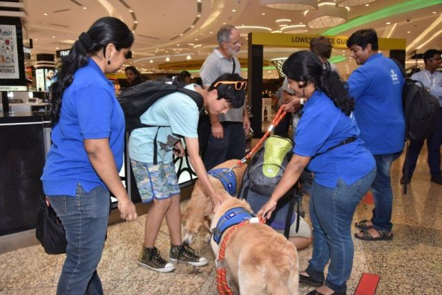 therapy dogs at airport