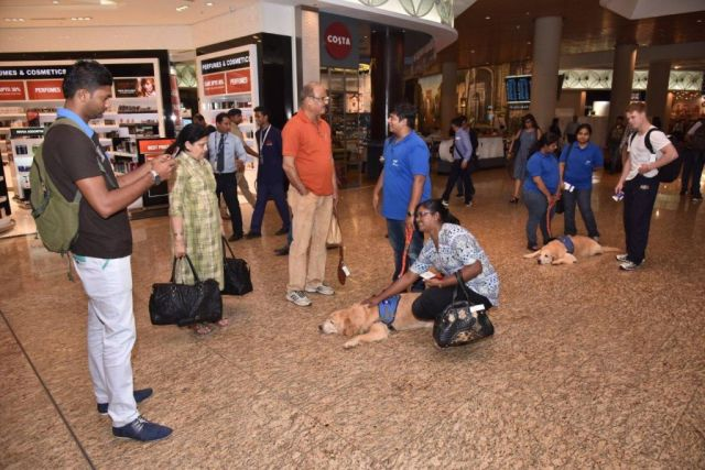therapy dogs bombay airport