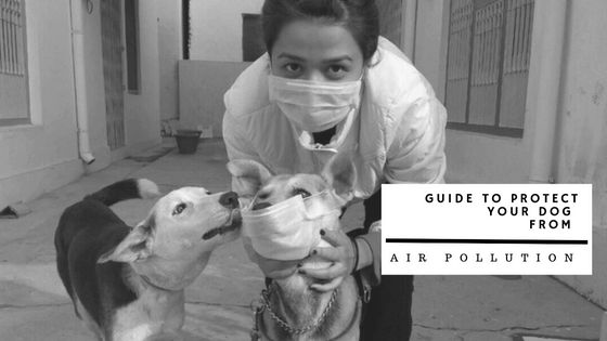 How to protect your dog from air pollution?