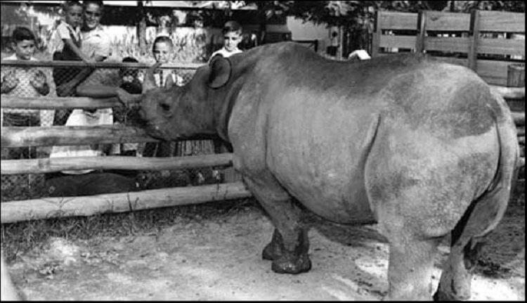 Rhino election Brazil