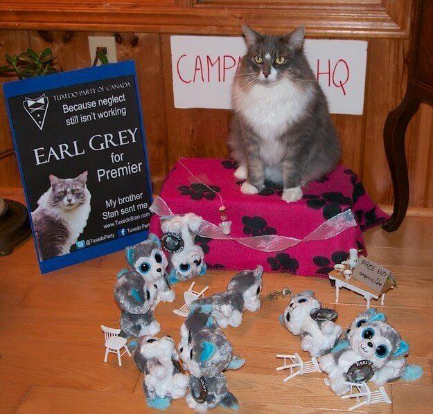 Earl grey cat politics