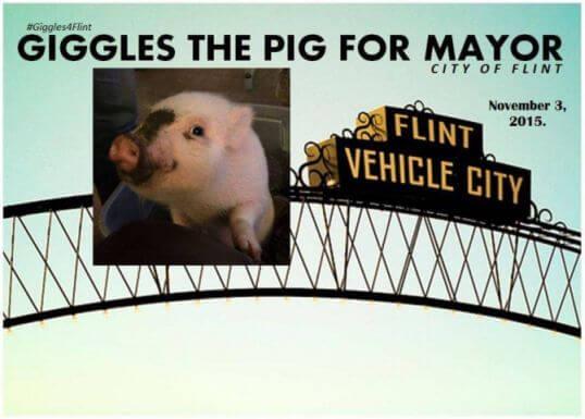 giggles pig