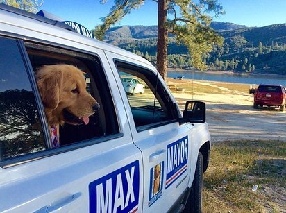 dog mayor max