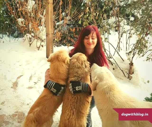 how to take care of your dog in winters