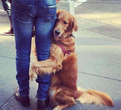 dog loves hugs