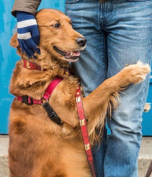 dog embrace human