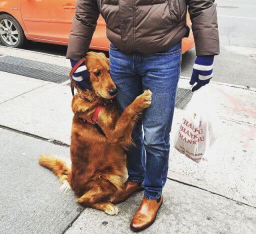 dog cuddle human