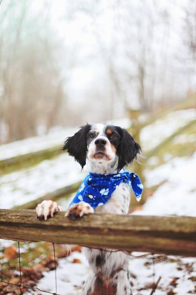 dog winter care