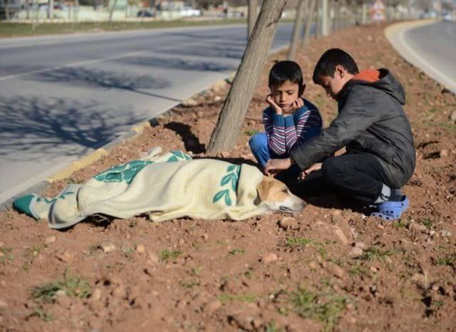 refugee boy saves dog