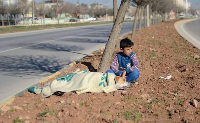 refugee boy helps stray dog
