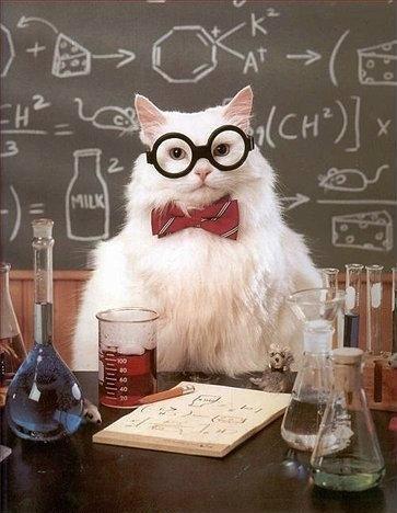 cute scientist cat