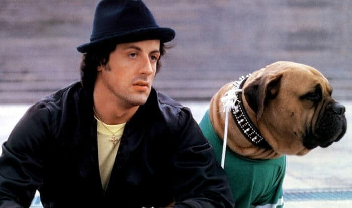 Sylvester Stallone's dog tribute