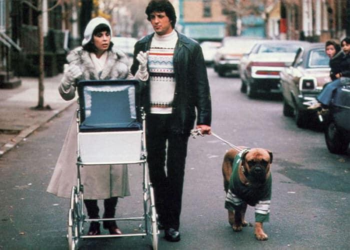 Dog Rocky Stallone