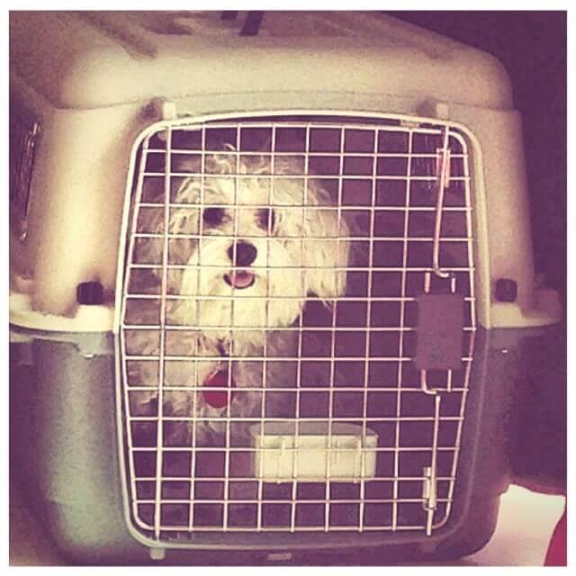dog crate India