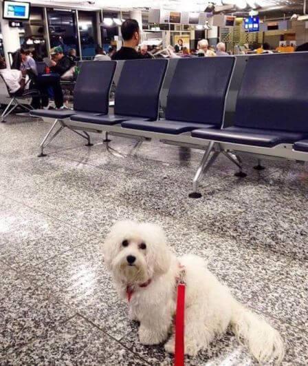 dog flight boarding